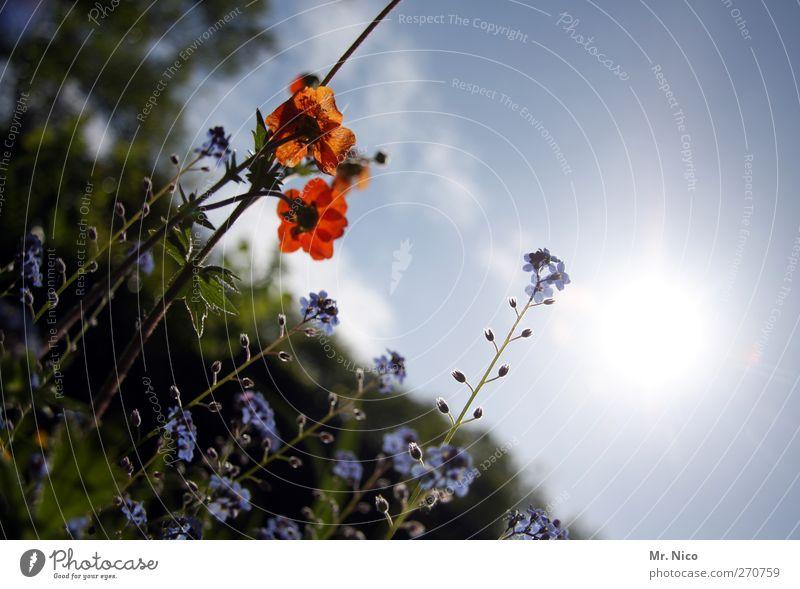 flower power II Natur rot Pflanze Sommer Blume Umwelt Wiese Frühling Glück Garten Blüte Luft Park Wachstum Idylle Schönes Wetter