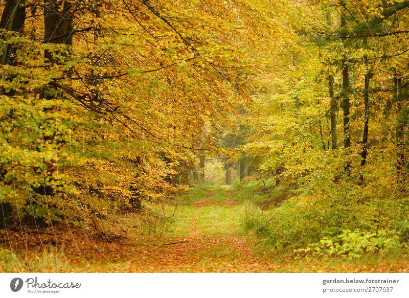 von Farbe gestreichelt Ferien & Urlaub & Reisen Natur Pflanze Landschaft Baum Erholung Freude Wald Herbst gelb Glück Gras Freiheit braun grau Ausflug