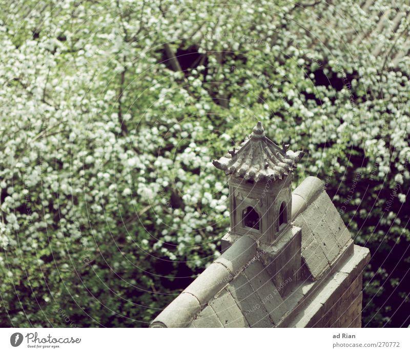 frühlingserwachen Natur Frühling Schönes Wetter Pflanze Baum Blatt Blüte Kirschblüten Kirschbaum Park Wald China Kleinstadt Skyline Haus Architektur Mauer Wand