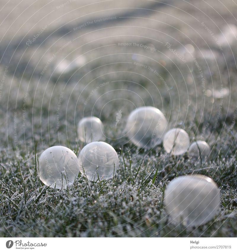 viele gefrorene Seitenblasen liegen auf einer Wiese mit Raureif Umwelt Natur Pflanze Winter Eis Frost Gras Garten Seifenblase Kugel frieren ästhetisch