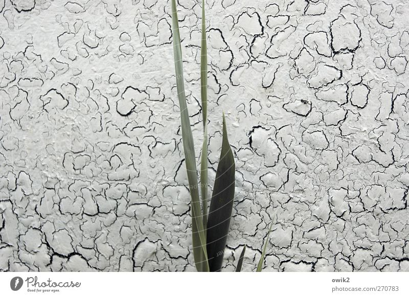 Allegorie Natur alt grün Pflanze ruhig Umwelt Leben Gras grau Glück klein Farbstoff natürlich Wachstum stehen Idylle