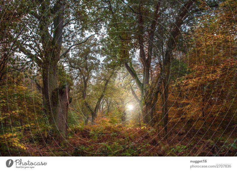 Wald im Herbst Umwelt Natur Landschaft Pflanze Tier Erde Himmel Sonne Sonnenaufgang Sonnenuntergang Sonnenlicht Sommer Klima Schönes Wetter Baum Gras Sträucher