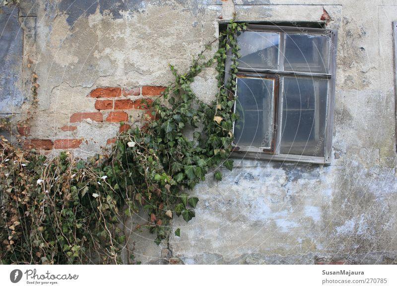 Natur alt Pflanze Haus Fenster Wand grau Mauer Zeit Fassade Armut Beton ästhetisch kaputt trist Wandel & Veränderung