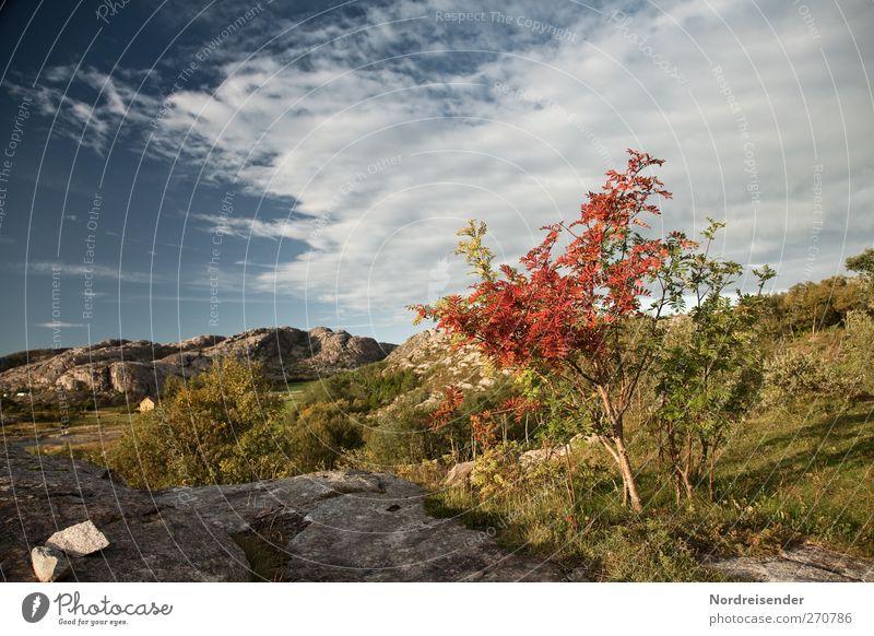 Indian Summer Himmel Natur Ferien & Urlaub & Reisen Baum Pflanze Sommer Farbe Einsamkeit Wolken Landschaft Berge u. Gebirge Herbst Freiheit Felsen Klima
