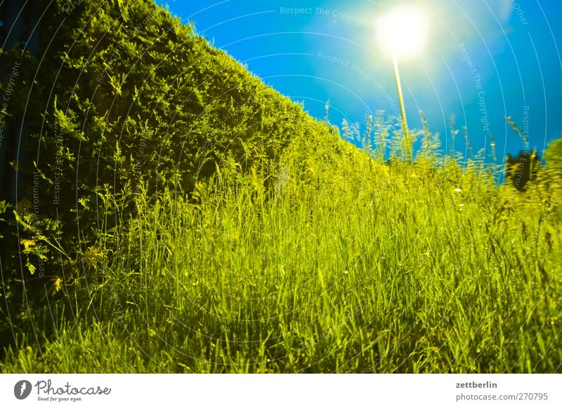 Abends im Gärtchen Himmel Natur Pflanze Sommer Blatt Umwelt Landschaft Wiese Garten Wetter gut Laterne Unwetter Gewitter Grünpflanze Hecke