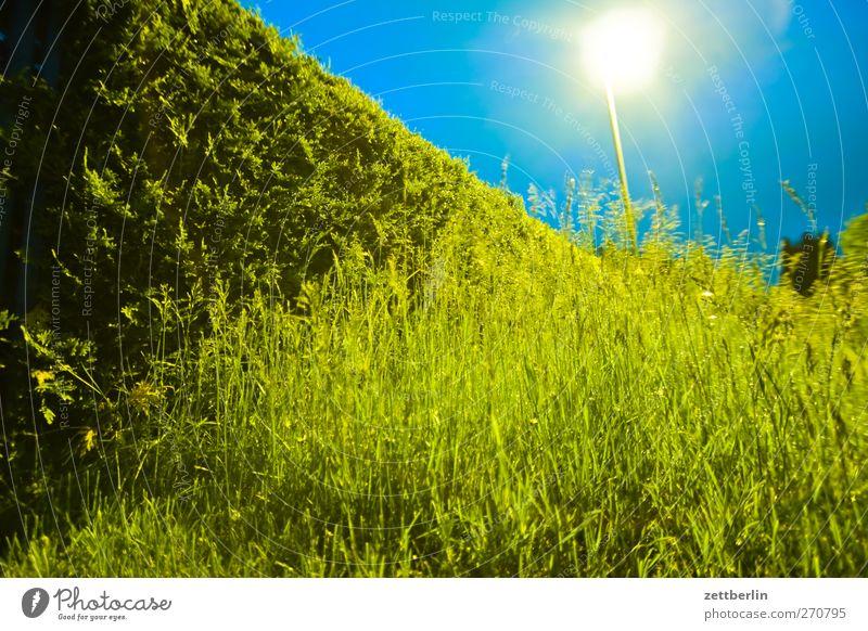 Abends im Gärtchen Sommer Garten Umwelt Natur Landschaft Pflanze Wetter Unwetter Gewitter Blatt Grünpflanze Wiese gut frühlig himmel kleingartenkolonie wallroth