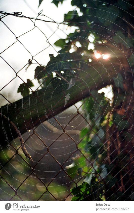 maschendrahtzaun makes me feel alright Sonnenlicht Frühling Sommer Pflanze Sträucher Wachstum Sehnsucht Heimweh Fernweh Einsamkeit Efeu Maschendraht Zaun