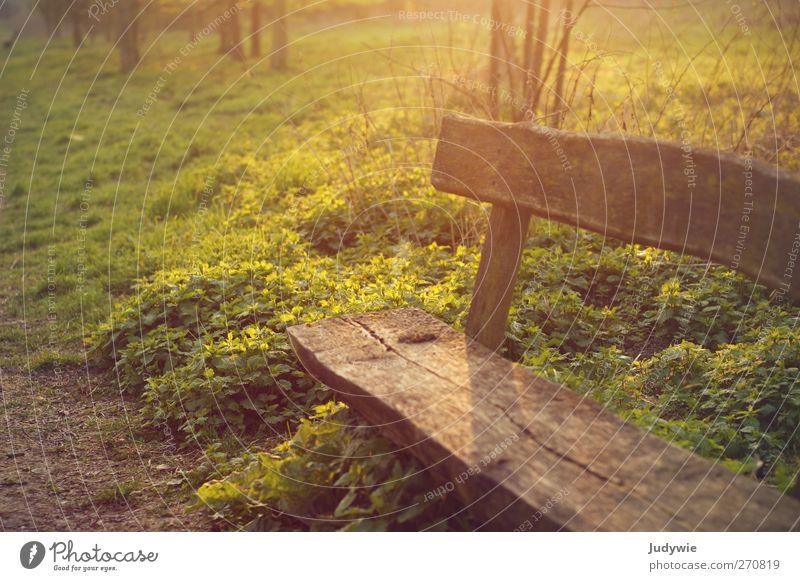 Setz dich. Erholung ruhig Freizeit & Hobby Sommer Umwelt Natur Sonne Sonnenaufgang Sonnenuntergang Herbst Pflanze Sträucher Park Bank Parkbank Holzbank sitzen