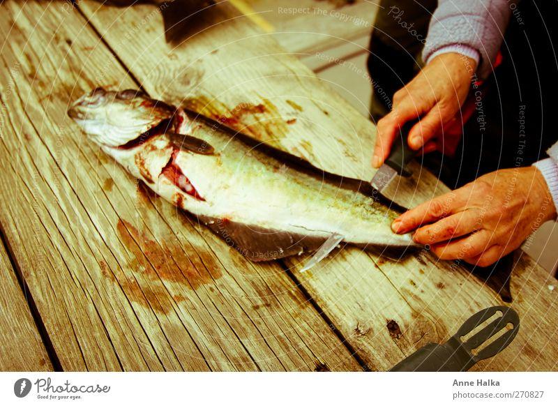 Köhler filetieren in Alt Hand Tier Holz Arbeit & Erwerbstätigkeit glänzend Fisch Teilung Angeln silber Messer Blut Alltagsfotografie Flosse Schuppen Sushi