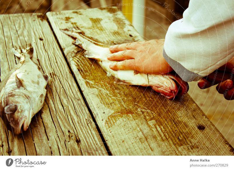 Dorsch filetieren in Alt Hand Meer Gesundheit Kraft Herz Erfolg frisch Fisch Reinigen fangen Jagd lecker gefangen Ausdauer schleimig Sushi