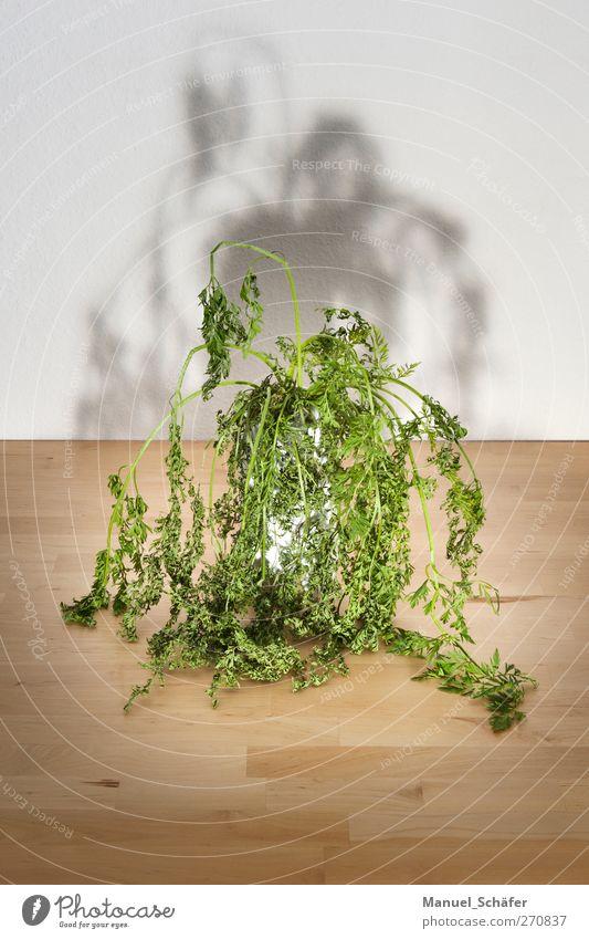HuiPuh das Krautgespenst Pflanze Blume Grünpflanze außergewöhnlich bedrohlich dunkel gruselig braun grün Stimmung Traurigkeit Trauer Angst skurril Tisch Vase