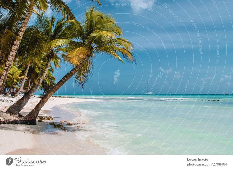 Saona Insel bei Punta Cana, Dominikanische Republik Ferien & Urlaub & Reisen Tourismus Ausflug Sommer Sommerurlaub Strand Meer Wellen Umwelt Natur Sand Baum