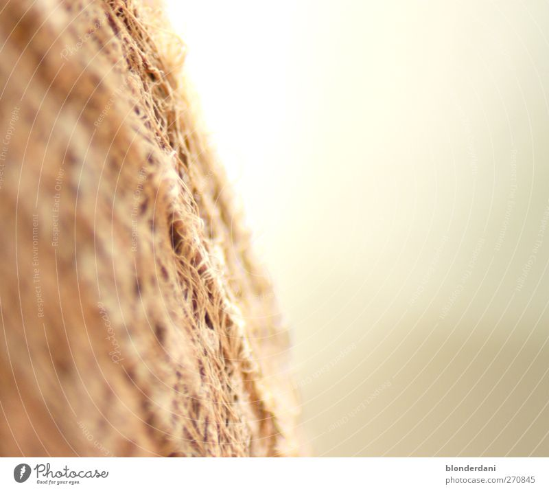 Struktur Natur Pflanze Sommer Einsamkeit ruhig Ferne grau braun geheimnisvoll Palmenwedel Bast Kokospalme