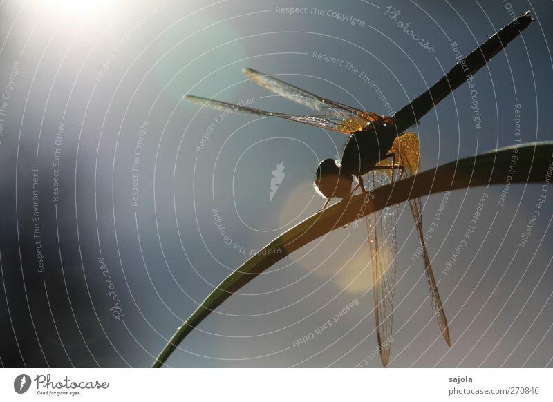 dragonfly on the spot Natur Tier Sonne Wildtier Insekt Libelle 1 Erholung sitzen warten ästhetisch Blendenfleck blenden Sonnenbad Farbfoto Außenaufnahme