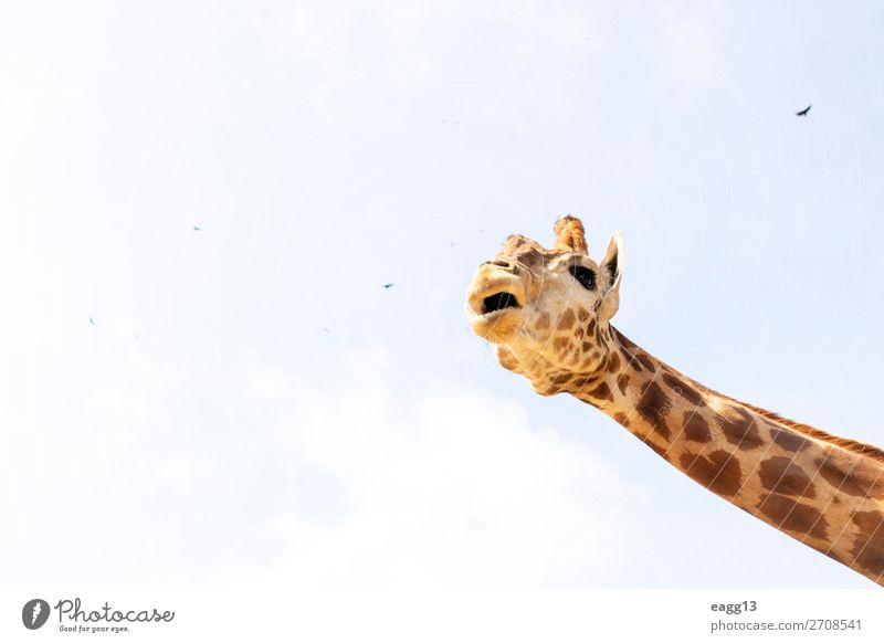 Himmel Ferien & Urlaub & Reisen Natur blau Farbe schön Landschaft Tier Gesicht gelb Umwelt natürlich Tourismus braun wild Wildtier