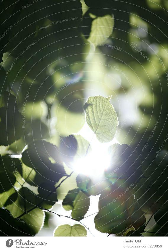 Hoffnung. Umwelt Natur Landschaft Pflanze ästhetisch ökologisch natürlich grün Blatt Licht Lichtspiel Lichtblick Blätterdach blätternd Idylle friedlich