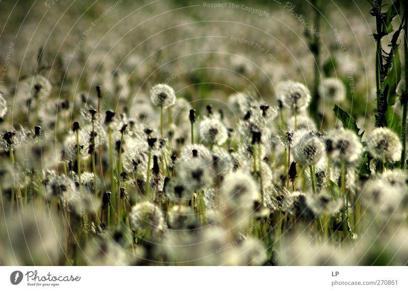 grün schön Pflanze Einsamkeit Wärme grau Horizont Stimmung Feld Energie Warmherzigkeit Hoffnung Gelassenheit silber