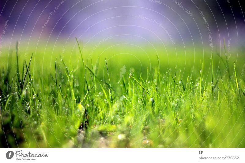 Natur grün Pflanze ruhig Umwelt kalt Leben Gras Garten frisch Wassertropfen neu Coolness einzigartig einfach violett