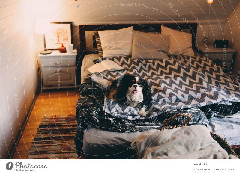 gemütliches Winterheim mit Hund im Bett schlafend Tee Lifestyle Erholung Freizeit & Hobby lesen Haus Buch Herbst Wärme Hütte Holz authentisch heiß niedlich
