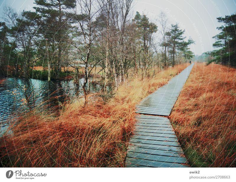Hölzernes Geplänkel Mensch 2 Umwelt Natur Landschaft Pflanze Urelemente Wasser Herbst schlechtes Wetter Regen Baum Gras Sträucher Moor Sumpf Teich Wege & Pfade