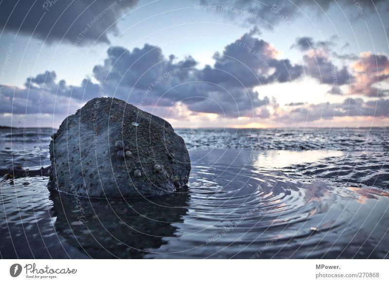 da tut sich wat im watt Umwelt Natur Wasser Wolken Horizont Seeufer kalt Meer Wattenmeer Stein Schnecke Wellen Nordsee Sand Schlamm Sonnenuntergang Menschenleer