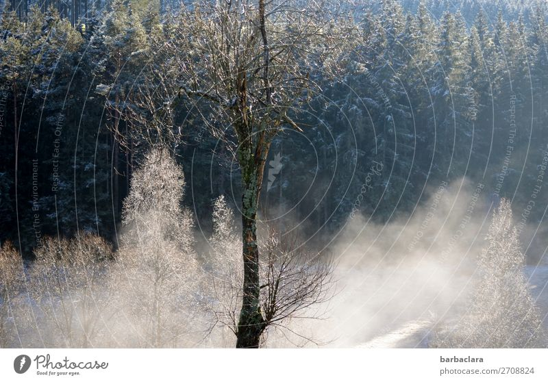 Wintermorgen im Schwarzwald Landschaft Nebel Eis Frost Schnee Baum Wald leuchten dunkel hell weiß Stimmung Beginn Klima Natur Umwelt Farbfoto Gedeckte Farben