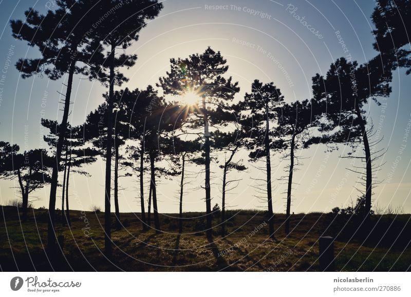 Hiddensee | llllll Himmel Natur Ferien & Urlaub & Reisen schön Sommer Sonne Baum Landschaft Ferne dunkel Wald Umwelt Freiheit Angst leuchten trist