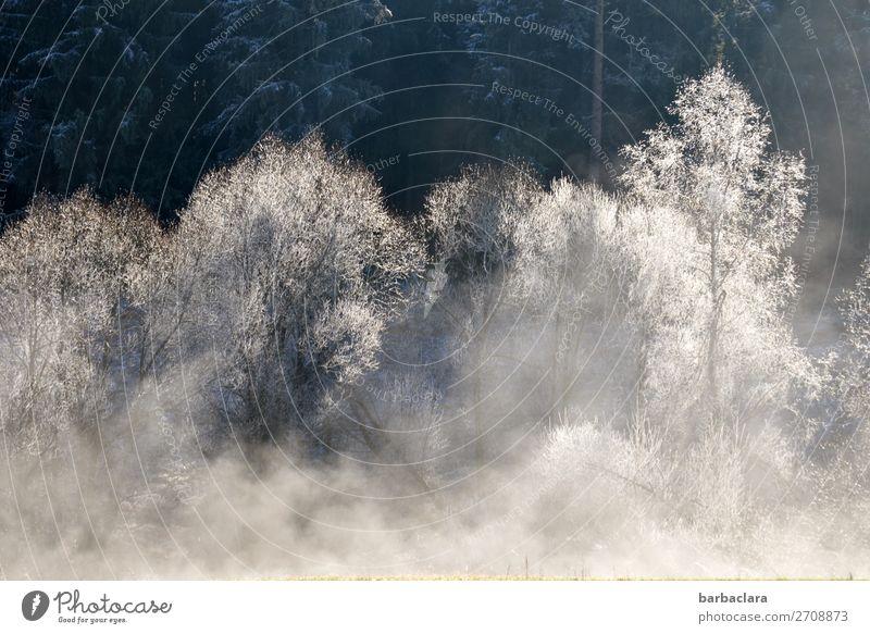 Winterzauber im Schwarzwald Urelemente Nebel Eis Frost Schnee Baum Wald Flussufer leuchten außergewöhnlich frisch hell kalt weiß Stimmung Beginn Klima Natur