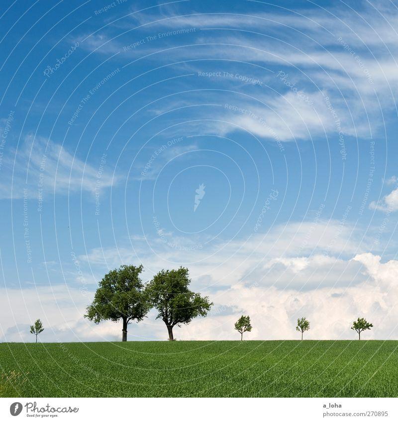 life is beautiful Umwelt Natur Landschaft Himmel Wolken Horizont Frühling Schönes Wetter Baum Gras Feld alt groß klein natürlich blau grün Ferne Farbfoto