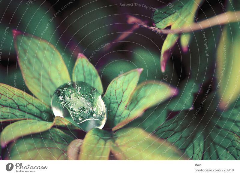 Eiskappe Natur Wasser grün Pflanze Blatt kalt Frühling Garten nass Wassertropfen Frost Sträucher Zweig Tau Grünpflanze