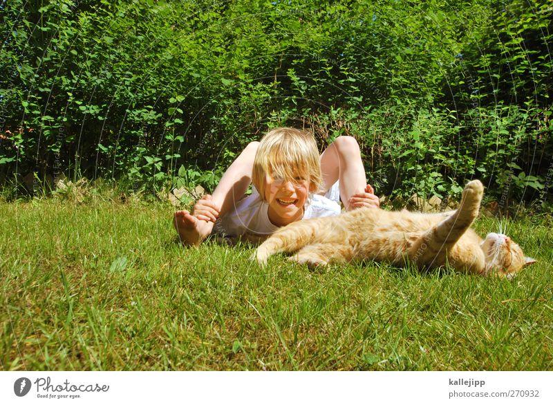 catwalk Katze Mensch Natur grün Pflanze Sommer Tier Umwelt Wiese Sport Leben Spielen Gras Junge Kopf lachen