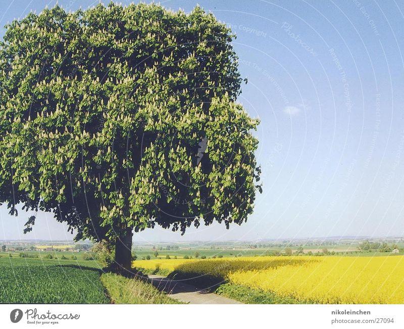 Baum Landschaft mit Baum