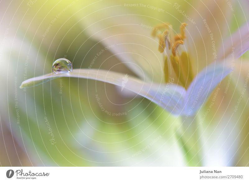 Natur schön Wasser Blume Erholung Freude Lifestyle Innenarchitektur Umwelt Blüte Frühling Feste & Feiern Stil Kunst Garten Design