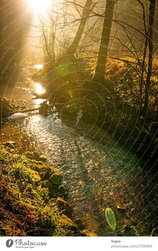 Sonnenstrahlen im Wald auf einen Bach Erholung Winter Natur Wärme Baum hell weich Idylle Sonnenerscheinung Lichterscheinung Spot schön leuchtend märchenhaft
