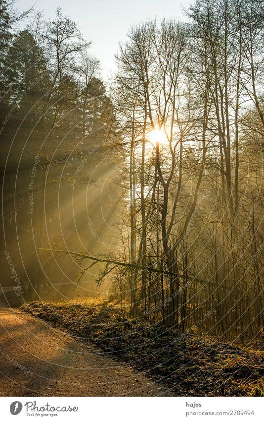 Sonnenstrahlen im Wald Erholung Winter Natur Wärme hell weich Idylle Spot leuchtend erleuchten Wege & Pfade sanft mystisch märchenhaft schön strahlend sonnig He