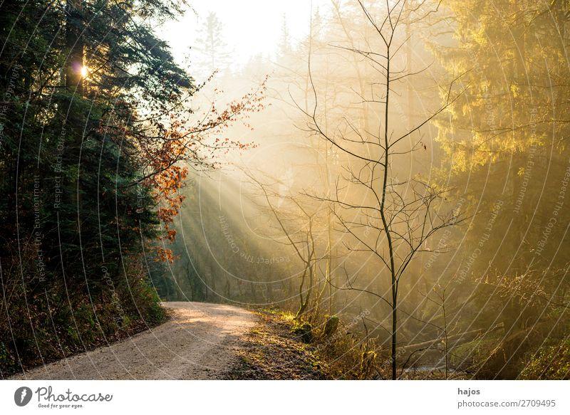 Sonnenstrahlen im Wald Erholung Winter Natur Schönes Wetter Wärme hell weich Idylle Bühnenbeleuchtung Beleuchtung Lichterscheinung leuchten Fußweg strahlend