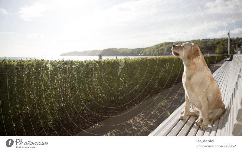 Sonnenanbeterin Lifestyle Freizeit & Hobby Ferien & Urlaub & Reisen Tourismus Ausflug Landschaft Wolken Schönes Wetter Küste Ostsee Tier Haustier Hund 1 sitzen