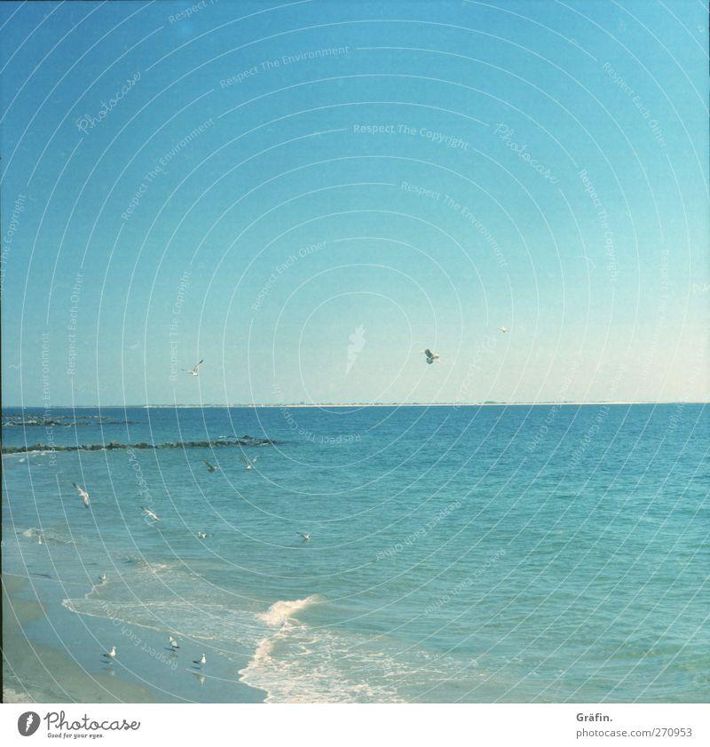 Coney Island Ausflug Ferne Freiheit Sommer Sommerurlaub Sonne Strand Meer Wellen Sand Luft Himmel Wolkenloser Himmel Atlantik Vogel Unendlichkeit blau ruhig