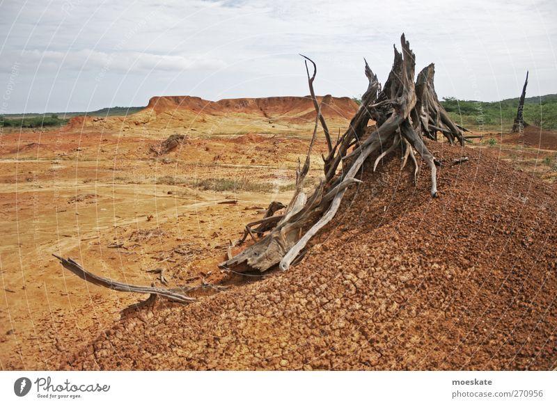 Wüstenwurzeln Himmel Ferien & Urlaub & Reisen Baum Sommer Einsamkeit Ferne Landschaft Sand braun Erde Abenteuer trist heiß trocken Klimawandel
