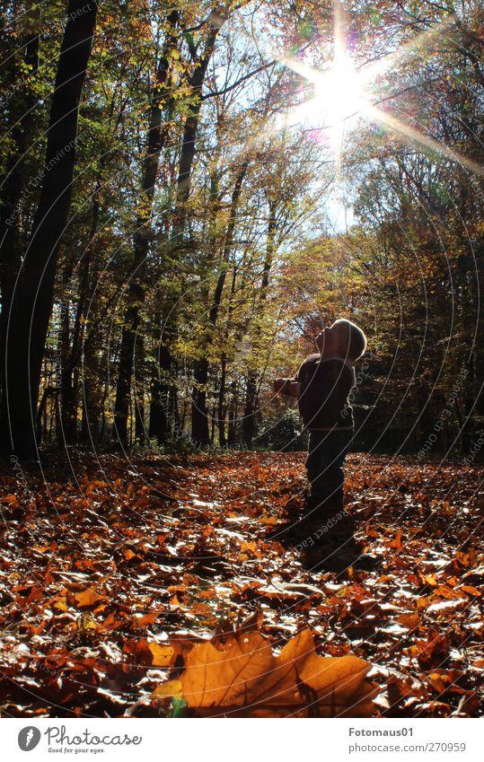 Julian im Gegenlicht Mensch maskulin Kleinkind Junge 1 1-3 Jahre Natur Sonnenlicht Herbst Schönes Wetter Wald beobachten entdecken Gefühle trösten ruhig Neugier