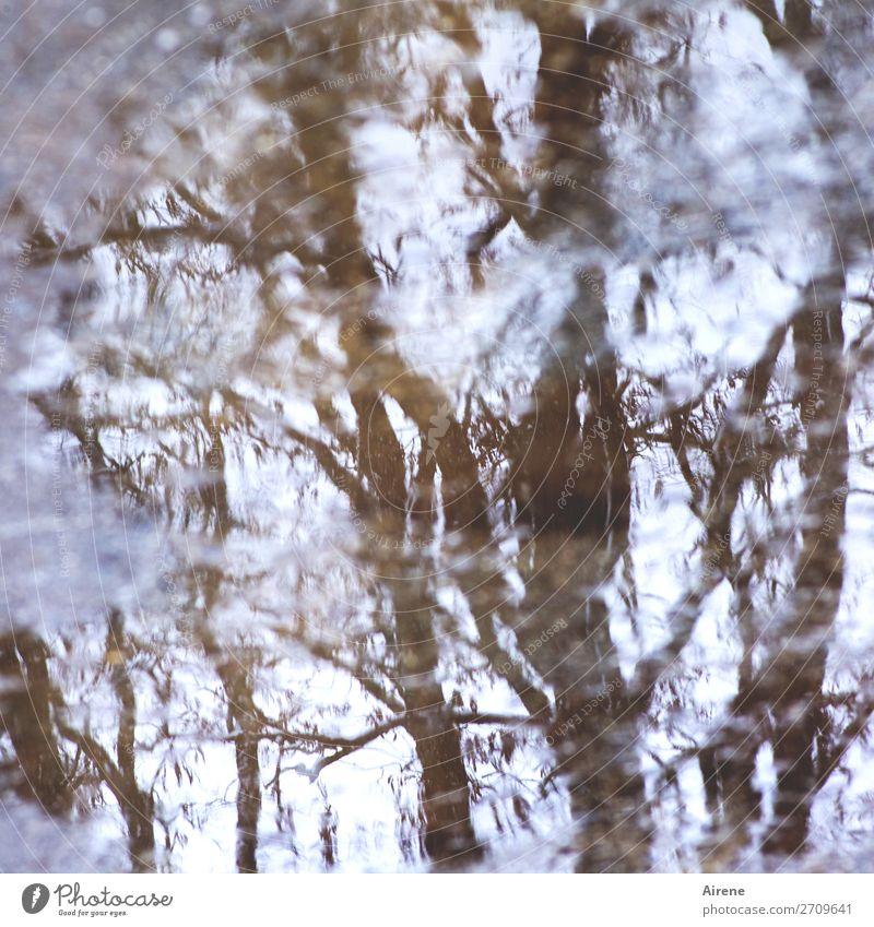 Zitterpartie Wasser Herbst Winter Baum Ast Reflexion & Spiegelung Wasseroberfläche Pfütze bedrohlich dunkel nass natürlich braun weiß verstört Irritation