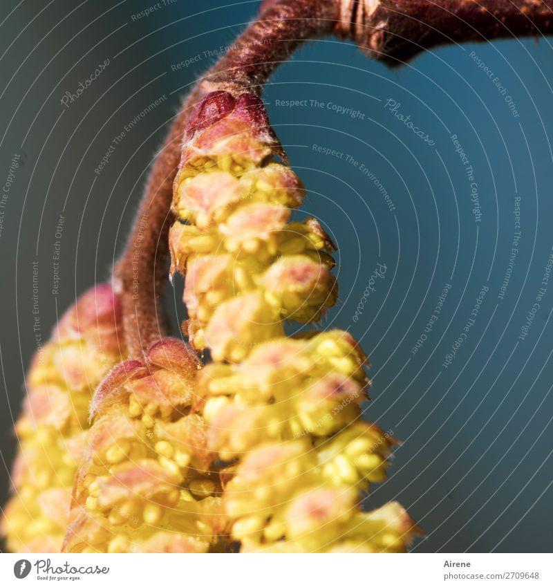 Aufbruchstimmung Frühling Schönes Wetter Baum Sträucher Blüte Blühend Wachstum natürlich positiv blau gelb gold rot Frühlingsgefühle Vorfreude Natur