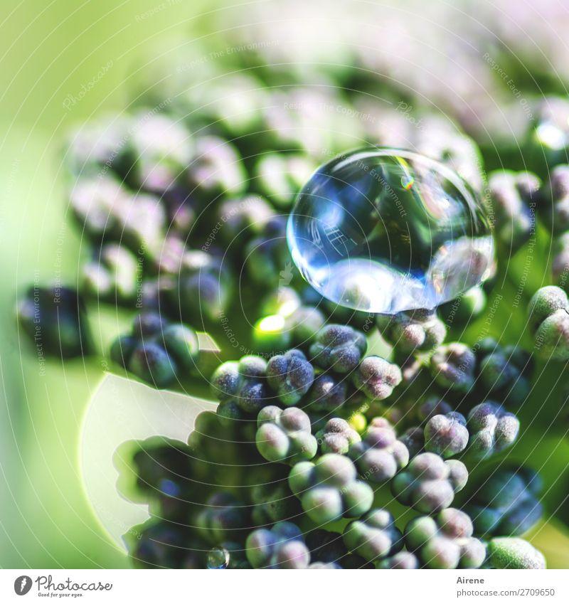 Tropfenfänger Gemüse Brokkoli Bioprodukte Vegetarische Ernährung Wassertropfen Nutzpflanze Garten perlen Flüssigkeit frisch Gesundheit nachhaltig positiv rund