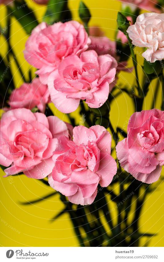 Blumenstrauß aus rosa Nelkenblüten elegant Stil Design Feste & Feiern Valentinstag Hochzeit Geburtstag Kunst Natur Pflanze Blatt Blüte natürlich gelb grün Liebe