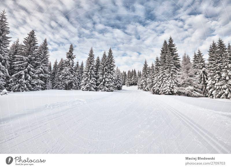 Himmel Ferien & Urlaub & Reisen Natur Landschaft Baum Wald Winter Ferne Berge u. Gebirge kalt Wege & Pfade Schnee Schneefall Horizont wandern Abenteuer