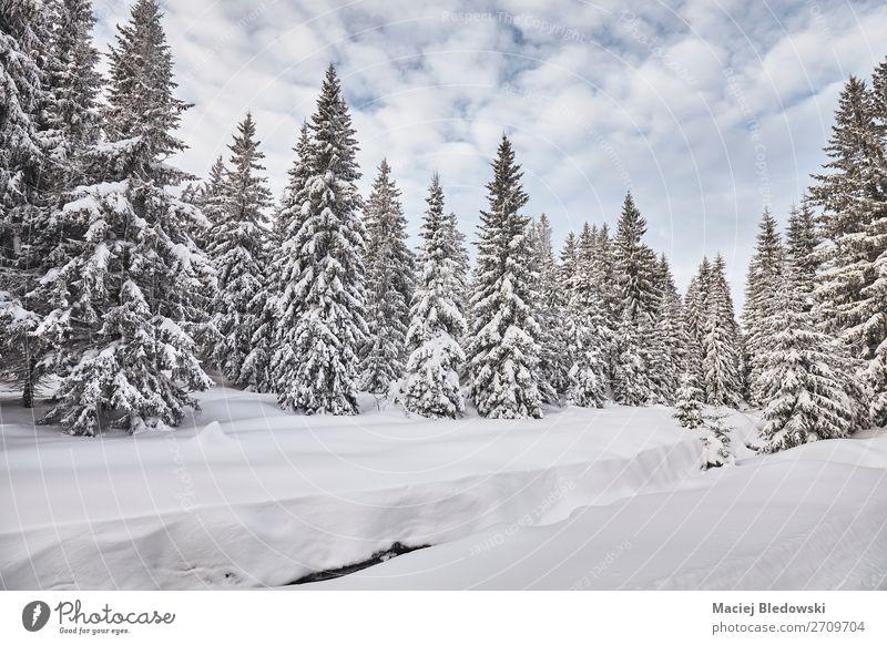 Winterlandschaft nach starken Schneefällen. Ferien & Urlaub & Reisen Ausflug Abenteuer Ferne Winterurlaub Berge u. Gebirge wandern Natur Landschaft Himmel Klima