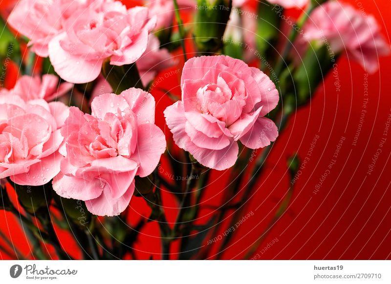 Blumenstrauß aus rosa Nelkenblüten elegant Stil Design Feste & Feiern Valentinstag Hochzeit Geburtstag Kunst Natur Pflanze Blatt Blüte natürlich grün rot Liebe
