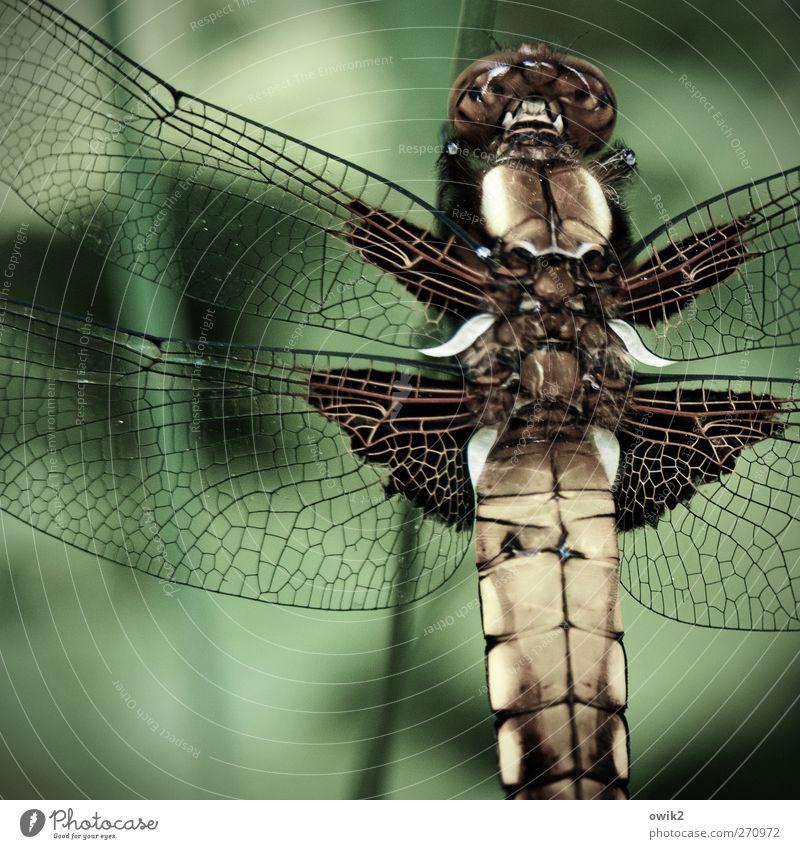 Individualist elegant Design Umwelt Natur Tier Klima Schönes Wetter Wildtier Flügel Libelle 1 sitzen warten exotisch schön einzigartig nah natürlich grün Idylle
