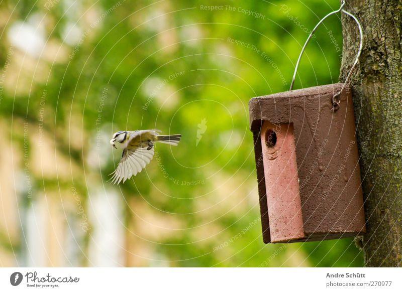 Lieferservice Umwelt Natur Blume Tier Vogel Meisen 1 fliegen füttern niedlich Zufriedenheit Lebensfreude Frühlingsgefühle Idylle Schutz Umweltschutz