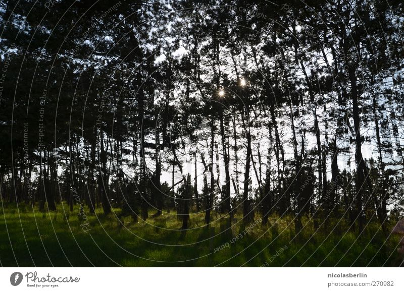 Hiddensee | :: 200 :: Tausend Bäume Ferien & Urlaub & Reisen Baum Landschaft dunkel Wald Umwelt Wiese außergewöhnlich Garten träumen Angst wild wandern Ausflug